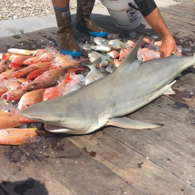 shark fishing trips naples florida 08